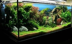 Aquarium Gestaltung Bilder : unsere zwei aquarium forum ~ Lizthompson.info Haus und Dekorationen