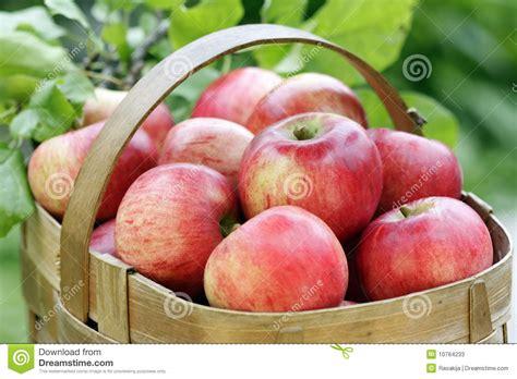 pomme al interieur panier des pommes rouges photos stock image 10764233