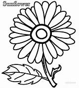 Coloring Sunflower Pages Simple Printable Cool2bkids sketch template