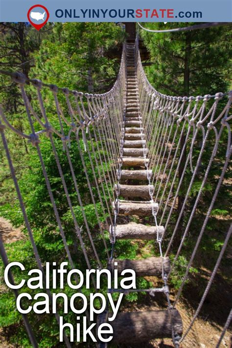 This Canopy Walk In Southern California Will Make Your ...