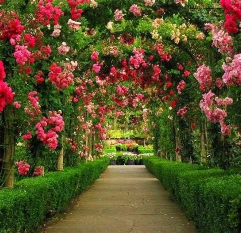 garden and flowers flower garden dreaming of spring pinterest