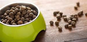 Anti Allergie Hund : greenheart anti allergie greenheart austria chemiefreie tiernahrung ~ Orissabook.com Haus und Dekorationen