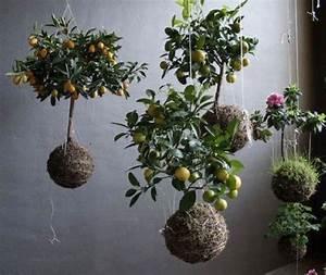 Kokedama String Garden (Japanese Moss Ball Planters