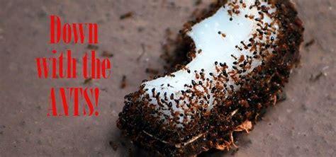 effective diy ant killer