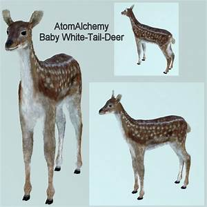 Baby White Tailed Deer 3D Model Game ready .obj .blend ...