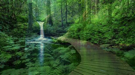 Peace, Nature, Field