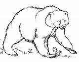 Bear Coloring Pages Printable sketch template