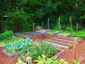 How's Your Veggie Patch Coming Along?