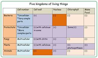 5 Kingdoms of Living Organisms