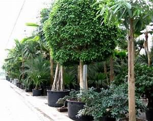 plante d With quelles sont les couleurs froides 13 quelles couleurs associer avec le vert elle decoration