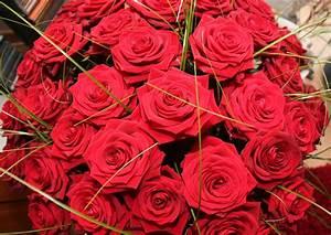 Begleitpflanzen Für Rosen : rosen f r die frau happy birthday foto bild stillleben arrangierte szenen motive bilder ~ Orissabook.com Haus und Dekorationen