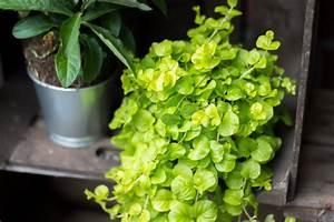Pflanzen Die Nicht Viel Licht Brauchen : 4 einfache balkon diy s zum selbermachen trytrytry ~ Markanthonyermac.com Haus und Dekorationen
