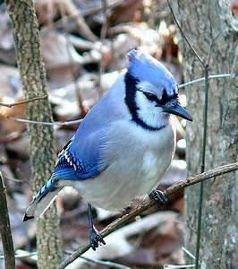 Les Yeux Les Plus Rare : d couvrez 20 extraordinaires animaux bleus une couleur rare dans le r gne animal ~ Nature-et-papiers.com Idées de Décoration