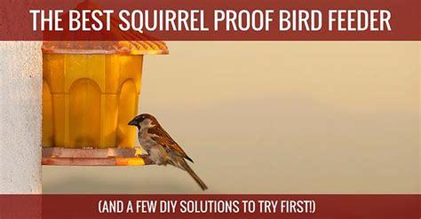 The Best Squirrel Proof Bird Feeder