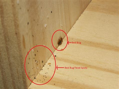 tips control bed bugs decorative