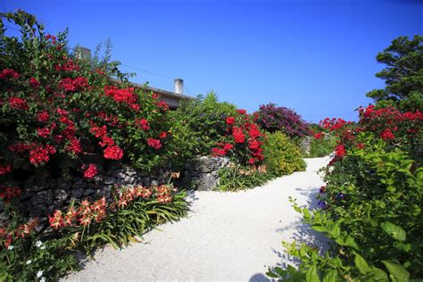 arbustes à fleurs arbuste 224 fleurs rouges liste ooreka