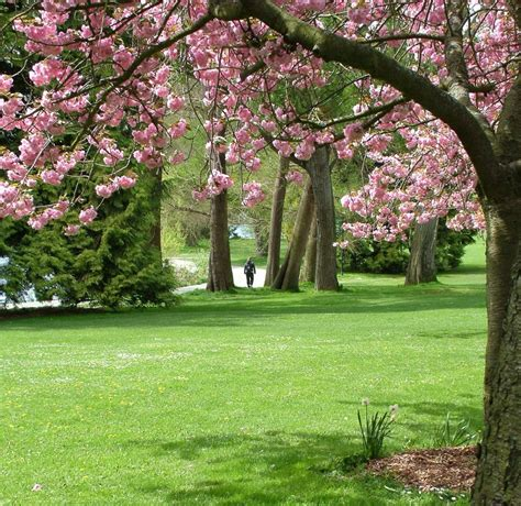 Seattle Parks and Recreation begins Park District ...