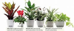 Popular today banana plants ferns and peace for Peace lily in bathroom