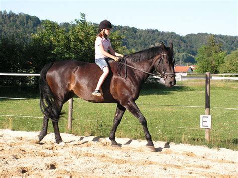 ohne sattel spass foto bild tiere haustiere pferde