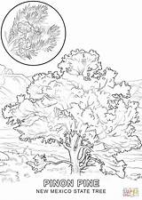 Coloring State Tree Pages Mexico Iowa York Drawing Elm Hawaii Skyline Printable Flower Symbols Getcolorings Supercoloring Getdrawings Template sketch template