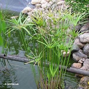 Plante Pour Bassin Extérieur : bassin ext rieur avec voiles de chine page 3 ~ Premium-room.com Idées de Décoration