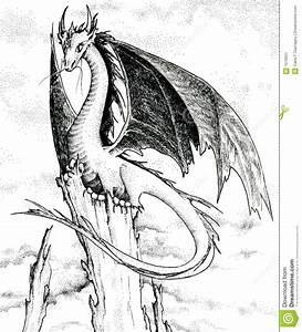 Drachen Schwarz Weiß : drache schwarzweiss abbildung stock abbildung illustration von phantasie flugwesen 1579051 ~ Orissabook.com Haus und Dekorationen