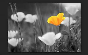 Combine black and white with color in a photo | Adobe ...