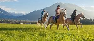 Großer kostenloser Pferdemarkt mit Kleinanzeigen und