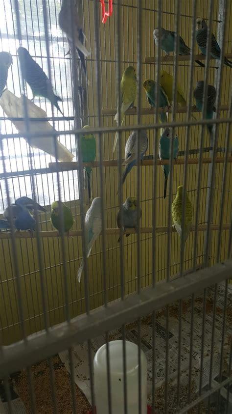 best 28 bird farms in california birds for sale in
