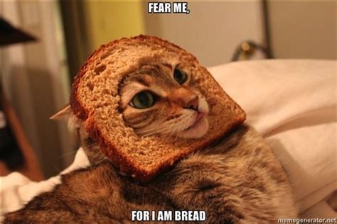 Cat In Bread Meme - the breading cats meme is still a thing apparently photos