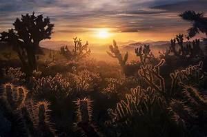 Beautiful Thorns Mojave Desert Mountains California