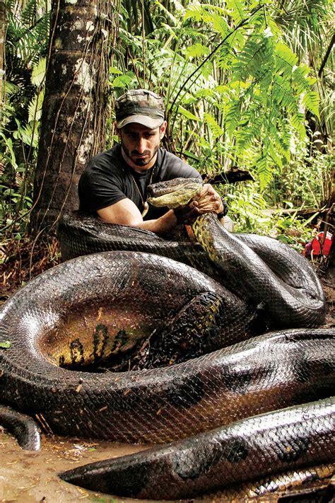 eaten   anaconda whats   rise   wrong