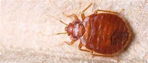 Insekten Im Haus : ungeziefer a s s sch dlingsbek mpfung m nchen ~ Lizthompson.info Haus und Dekorationen