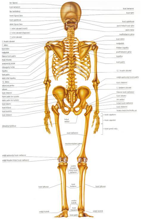 Popis lidského těla anglicky
