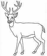 Deer Coloring Pages Enjoyable Leisure Totally Activity Forget Supplies Don sketch template