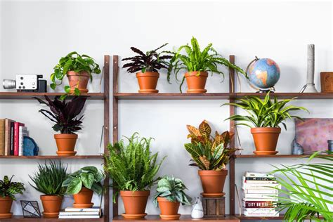 Buy Indoor Plants Online At These Stores-curbed