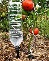 Blumen Bewässerung Im Urlaub : bew sserungskugeln pflanzen g rtnern selbstversorger bio zimmerpflanzen pflanzen ~ Orissabook.com Haus und Dekorationen