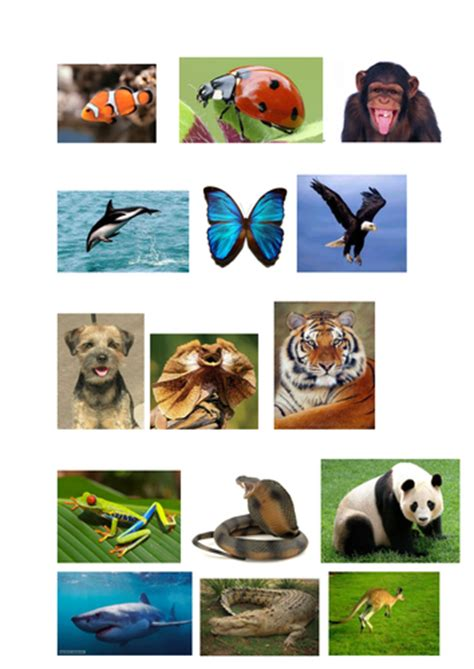 Classifying Animals Worksheet and Pictures by pantobabe