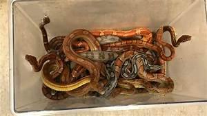 Box Of Snakes Left Outside Vet U2019s In Somerset