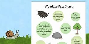 Woodlice Fact Sheet