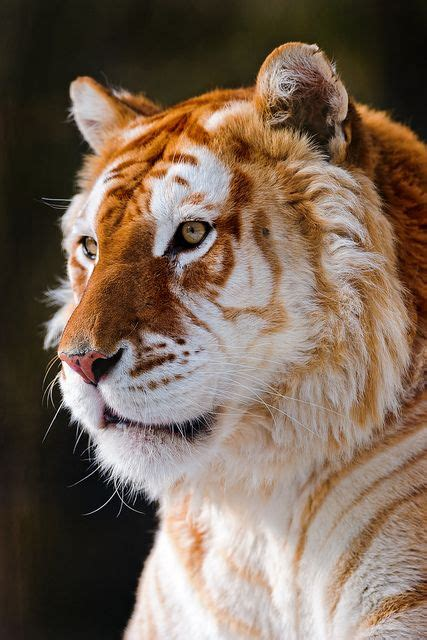 Random Inspiration Big Cats Animales