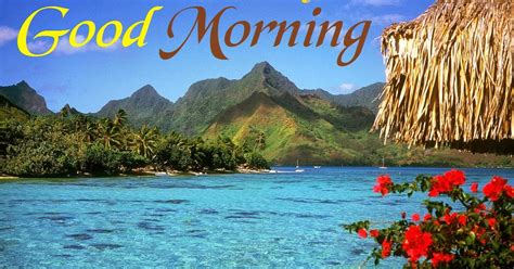 good morning nature  colorful morning images