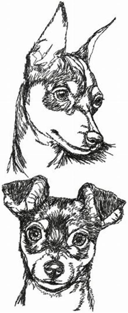 Pinscher Miniature Embroidery Dog Designs Drawing Advanced