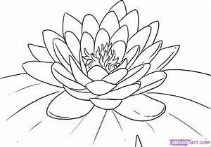 inkspired musings: The Language of Flowers - Water Lily