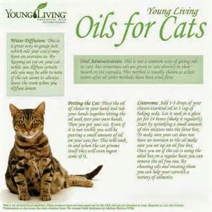 essential oils cats healing oils for animals how to use essential oils for