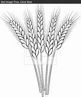Clip Wheat Stalk Outline Drawing Coloring Stencil Mano Disegni Ricamo Sketch Clipart Pyrography Drawings Colorare Pane Chicco Dal Wood Sketches sketch template
