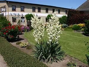 Yucca Palme Winterhart : palmlilie yucca filamentosa sch nste stauden ~ A.2002-acura-tl-radio.info Haus und Dekorationen