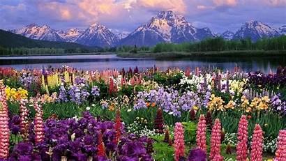 Spring Desktop Wallpapers Nature Backgrounds Wallpaperaccess