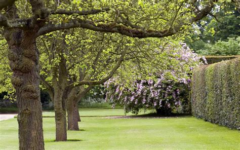 garden trees desktop wallpaper of trees and blossom at hardwick hall