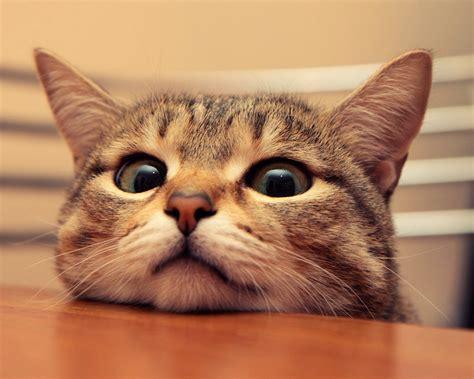1280x1024 Cute Cat Desktop Pc And Mac Wallpaper